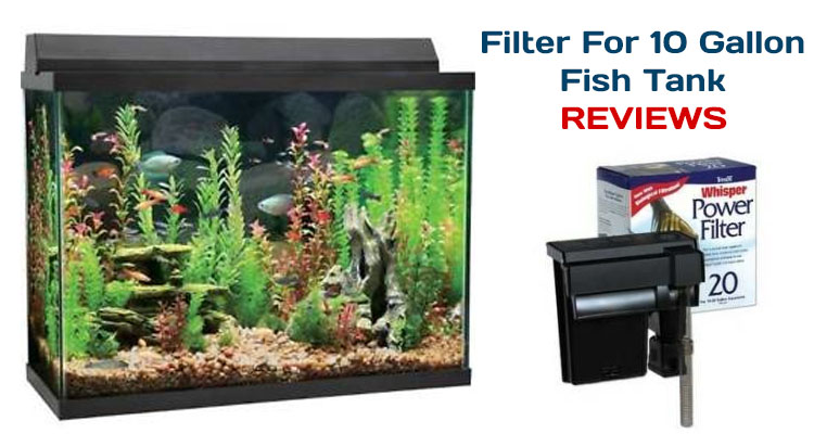 Best filter for 10 gallon fish tank informinc for 10 gallon fish tank with filter