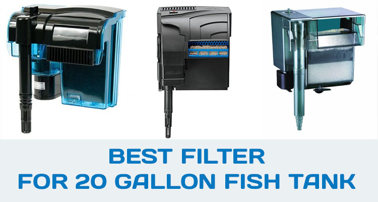 Filter For 20 Gallon Fish Tank Reviews