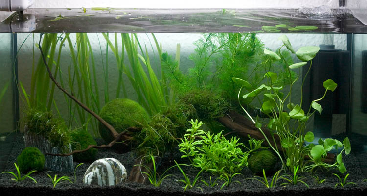 Filter For A 55 Gallon Fish Tank Reviews