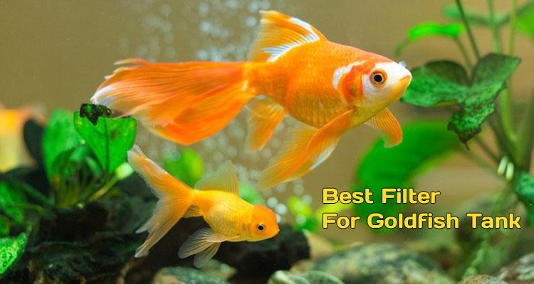 Filter For Goldfish Tank Reviews