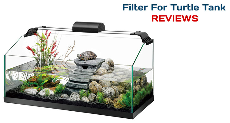 Filter For Turtle Tank Reviews