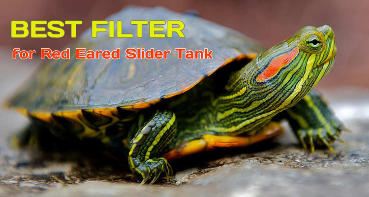 Filter for Red Eared Slider Tank Reviews