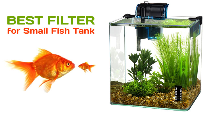 Best filter for small fish tank informinc for Good fish for small tanks